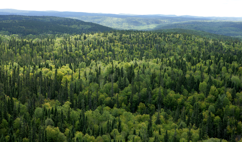 first nations protecting boreal forest wawatay news online